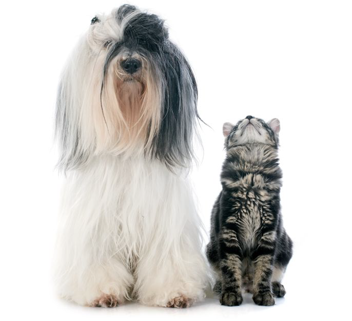 Dog with cat looking up