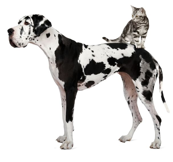 Dog with cat on back